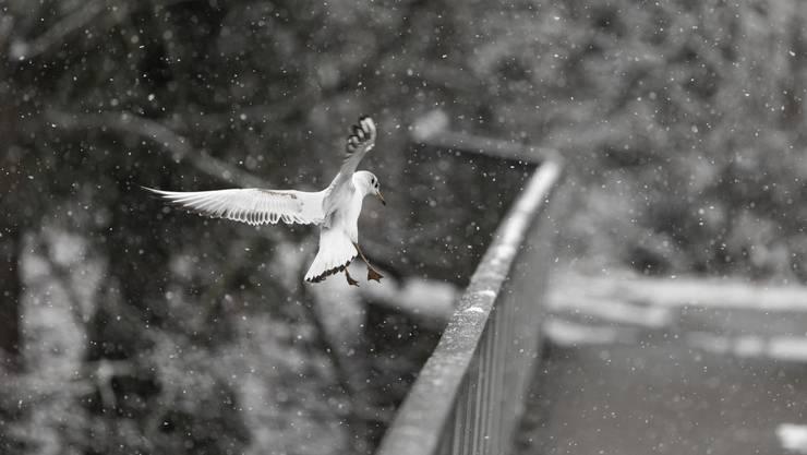 Ob dieser Vogel wohl auch die Kälte spürt?