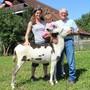 Nik Sax und seine Esel