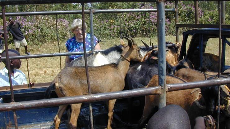 Margrit Fuchs zeigte sich begeistert von der AZ-Idee der Viehverteilungen. Hier begutachtet sie eintreffende Milchgeissen.