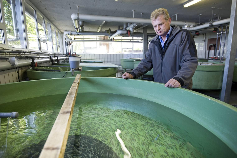 Michael Kugler, Sachverständiger Fischerei beim Kanton St.Gallen (Archivbild: St.Galler Tagblatt)