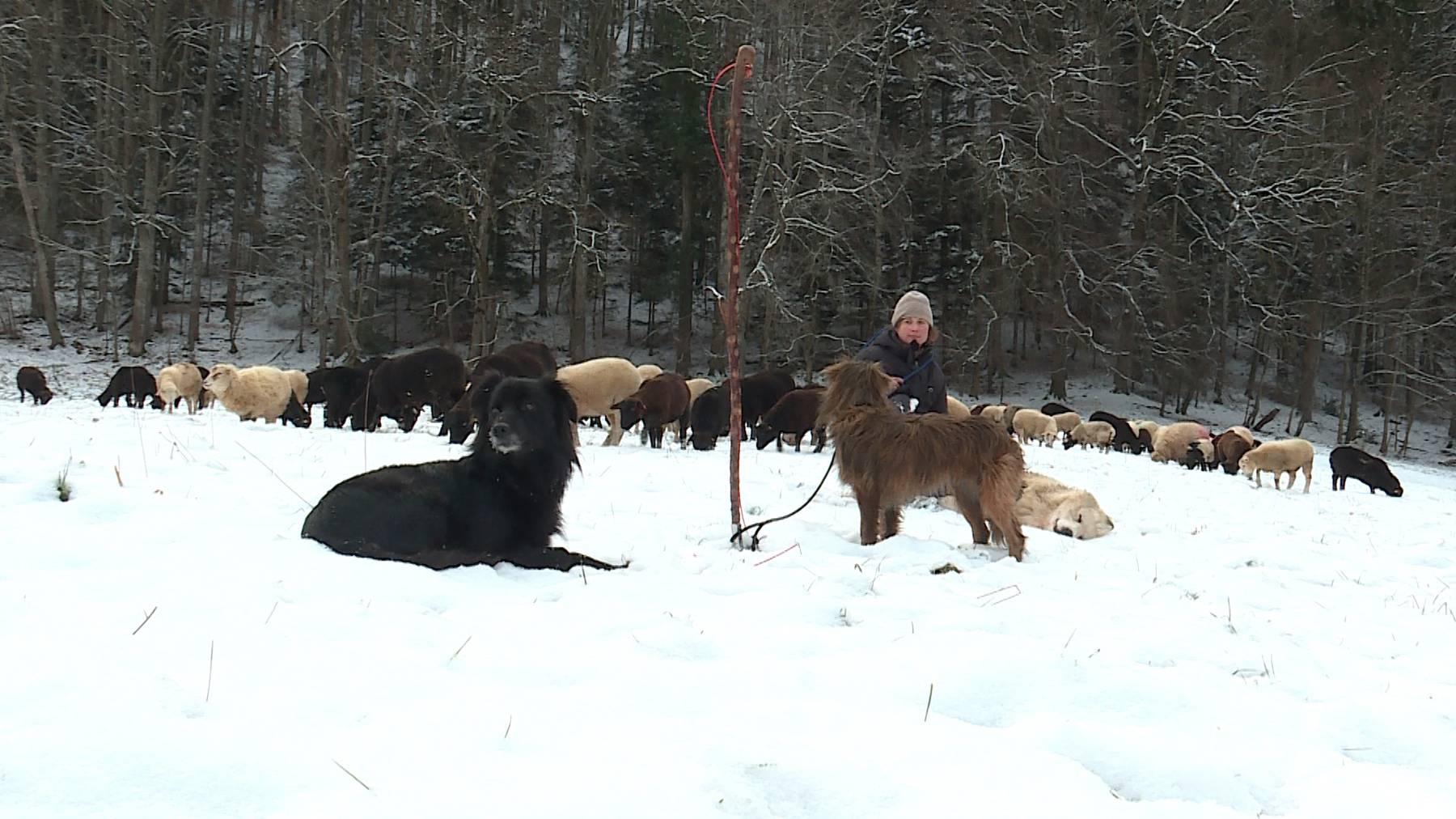 Sarah Müri ist Schafhirtin und zieht mit ihrer Herde während den Wintermonaten im Baselbiet von Weide zu Weide.
