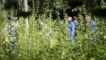 Die Asylsuchenden reissen die Neophyten aus. Weil bis zu 18 Personen mitarbeiten, können sie eine grosse Fläche in kurzer Zeit von den unerwünschten Pflanzen befreien. Dominic Kobelt