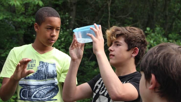 Fasziniert untersuchen die Schüler des Schulheims Schloss Kasteln die gefundene Gelbauchunke.
