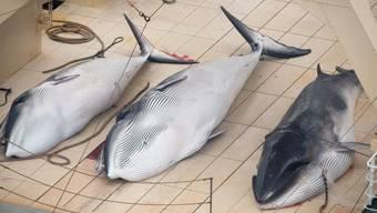 Drei Walfische auf einem japanischen Walfangschiff (Archiv)