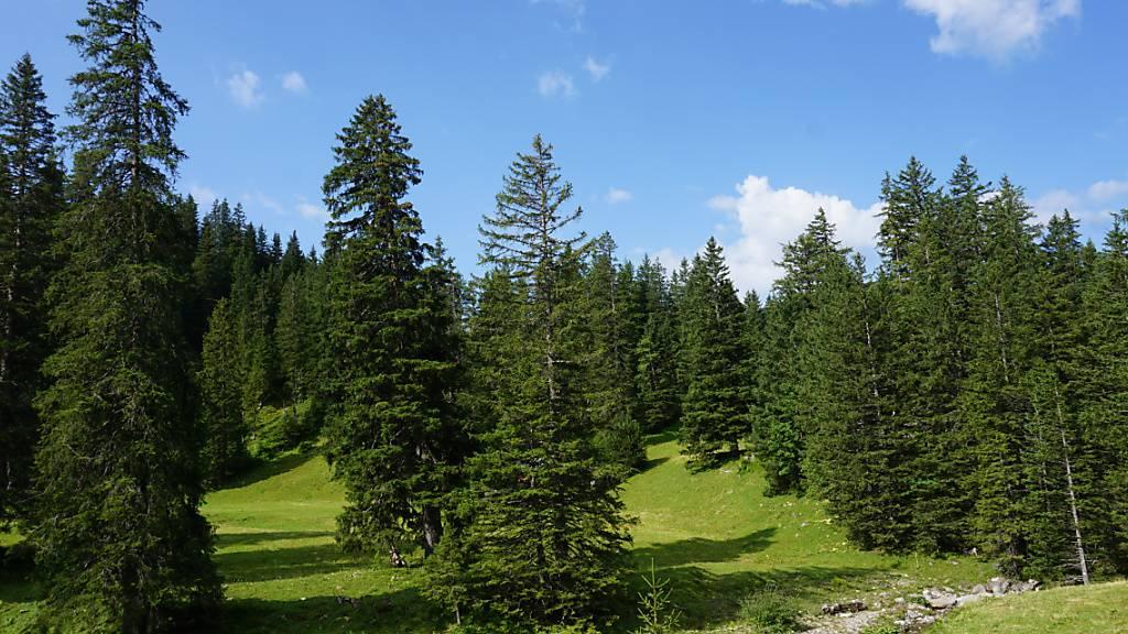 Die jüngsten Daten des Landesforstinventars förderten einen neuen Mittelpunkt des Schweizer Waldes zutage. Dieser liegt demnach auf der Alp Älggi in Sachseln OW (ungefähr in der Mitte des Bildes).