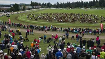 Grosse Parade mit 400 Pferden am Sonntag in Saignelegier