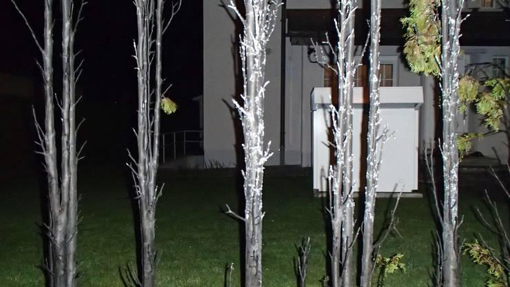 So sieht die Hecke nach dem Brand aus
