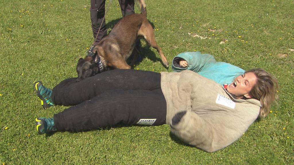 In den Fängen von Polizeihund Ares