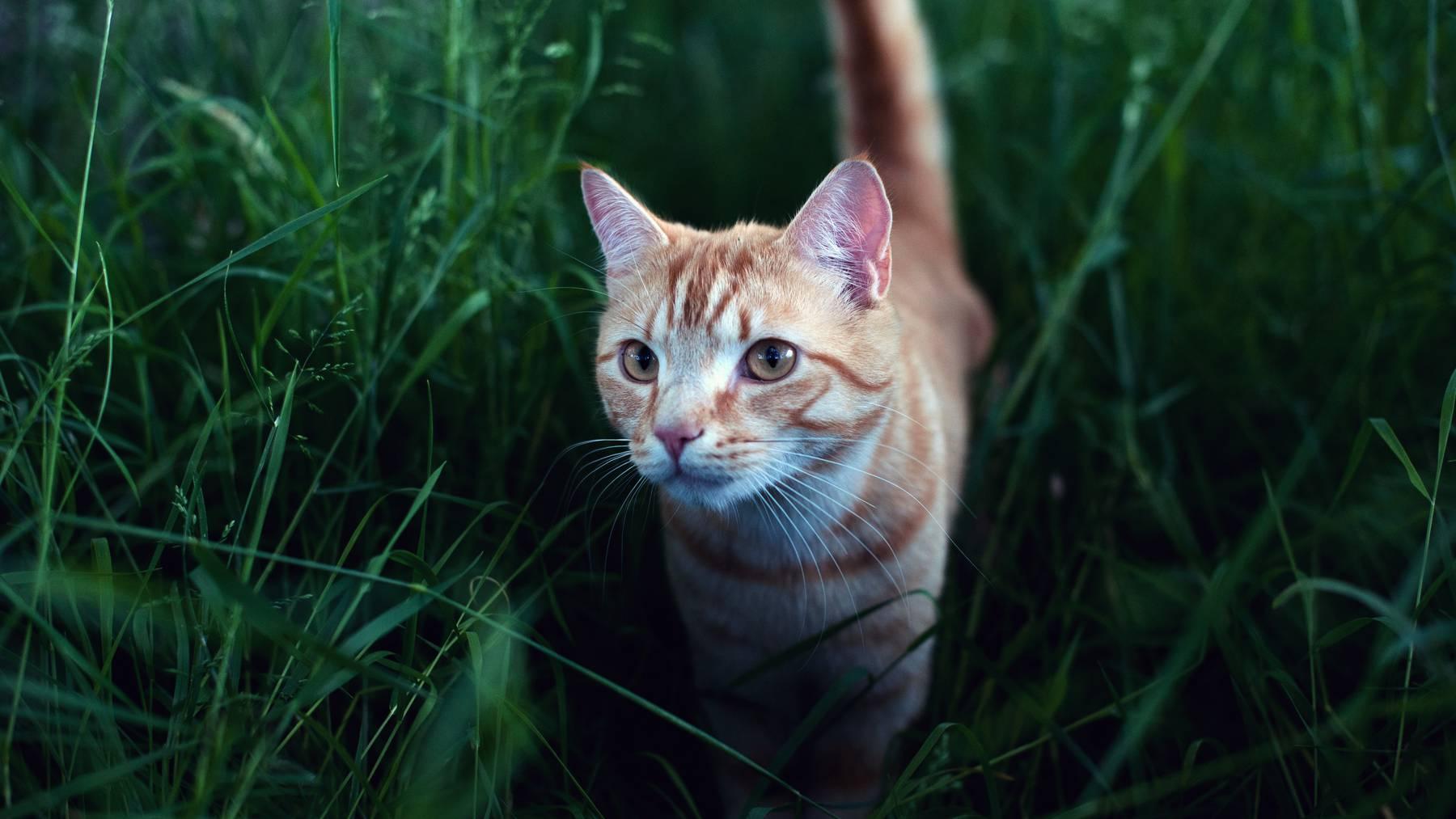 Eine Katze im hohen Gras