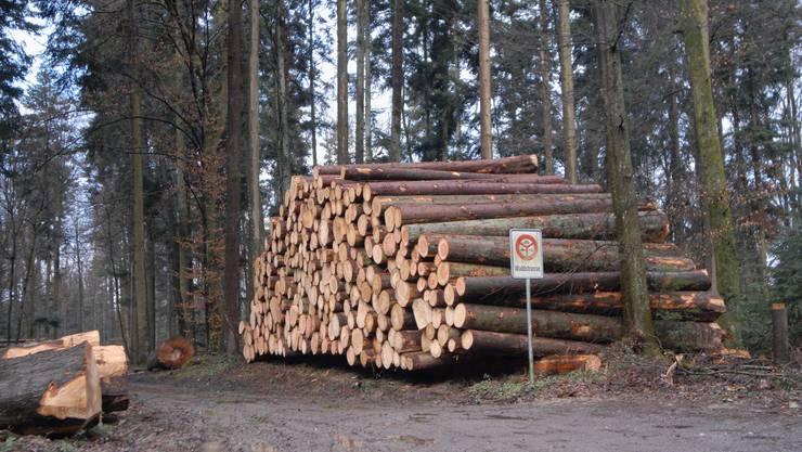 Wald Für Nutzung, Naturwerte und die Erholung