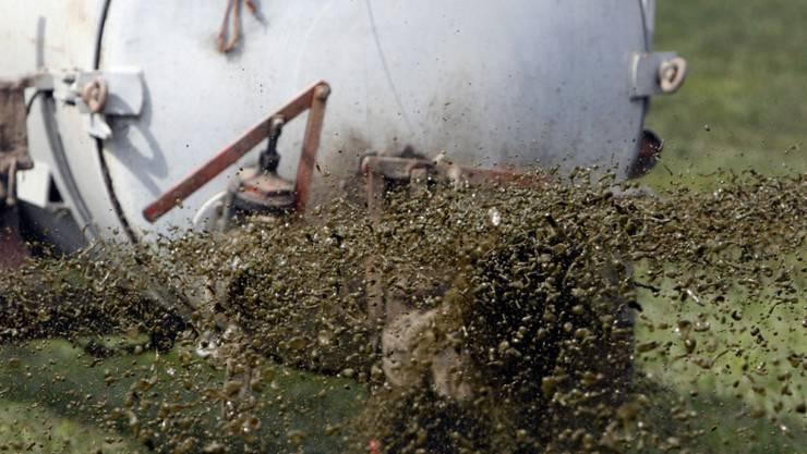 Ausgelaufen statt ausgebracht: Gülle aus einem Schweinestall hat in der Glâne rund 500 Fische getötet. (Themenbild)