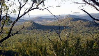 Irgendwo im Dschungel von New South Wales wohnte die Grossfamilie. (Symboldbild)