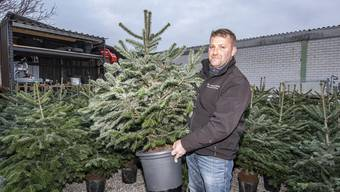 Maik Langbein vermietet Weihnachtbäume im Topf. Am beliebtesten sind die Nordmanntannen.