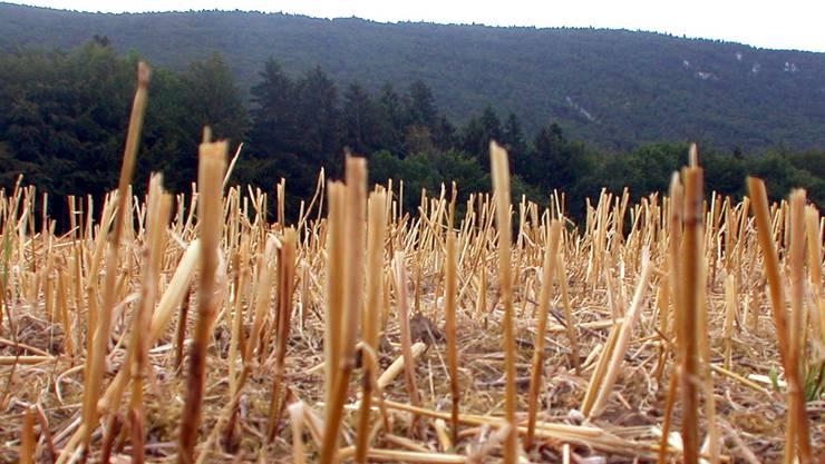 Der Hitzesommer 2003 brachte die Bauern an den Rand der Verzweiflung, im Bild ein Feld bei Lommiswil 2003