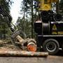 Die Aargauer Stimmberechtigen haben entschieden, dass die Waldbesitzer nicht mehr Geld für die Bewirtschaftung der Wälder erhalten.