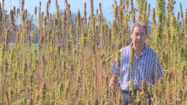 Heinz Siegenthaler strebt Hanf-Legalisierung an