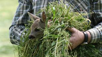 Dieses Rehkitz konnte gerade noch von einem Bauern gerettet werden.