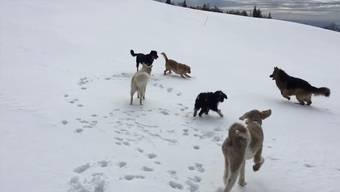 Ausflug der Hundeschule Berghof aus Arch auf den Weissenstein