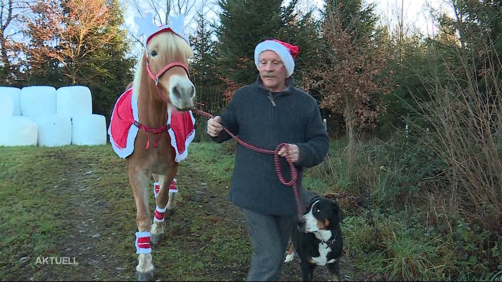 Wie feiert man mit Haustieren Weihnachten?