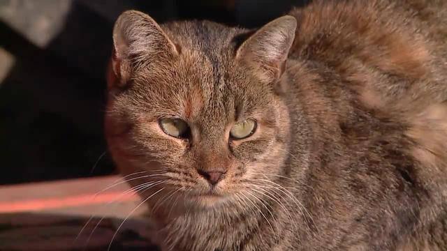 Katzen-Kastration: Gesunde Bauernhofkatzen