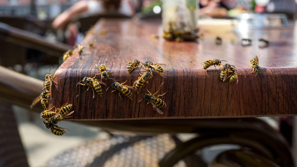 Es blüht ein Spätsommer voller Insekten
