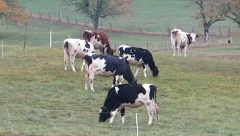 Was fast noch mehr besorgt als das, was die Kühe nicht überall tragen dürfen, ist das, was die Tiere ausscheiden. (Archivbild)