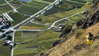 Walliser Rebpflanzenzüchter wollen diesen Winter 600'000 Schösslinge mit heissem Wasser behandeln, um den Weinbauern noch krankheitsresistentere Pflanzen anbieten zu können. Die Massnahme ist laut dem Walliser Weinbauamt in diesem Ausmass schweizweit einzigartig. (Archivbild)