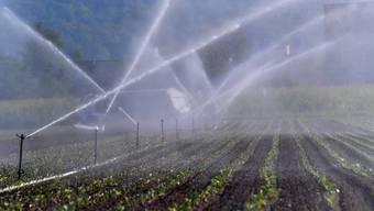 Trockenheit macht den Bauern zu schaffen