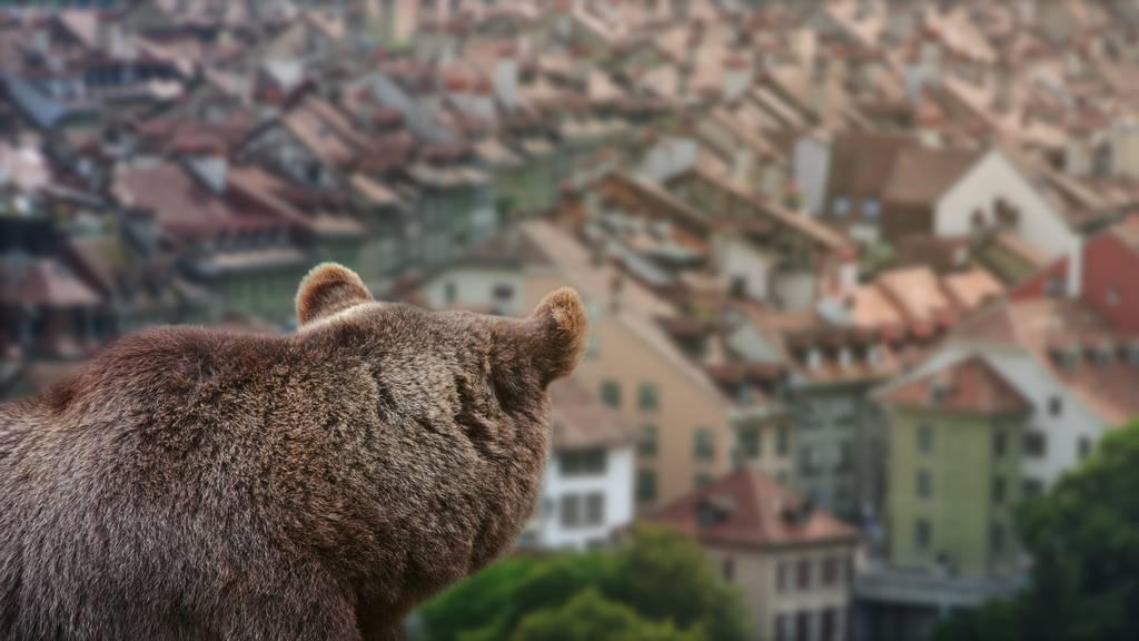 Braunbären nach Ausbruch aus Zoogehege nahe London erschossen