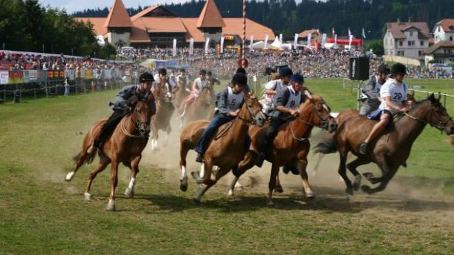 Beim stimmungsvollen Pferderennen am Marché-Concours in Saignelégier JU. Foto: Schweizerischen Freibergerverband