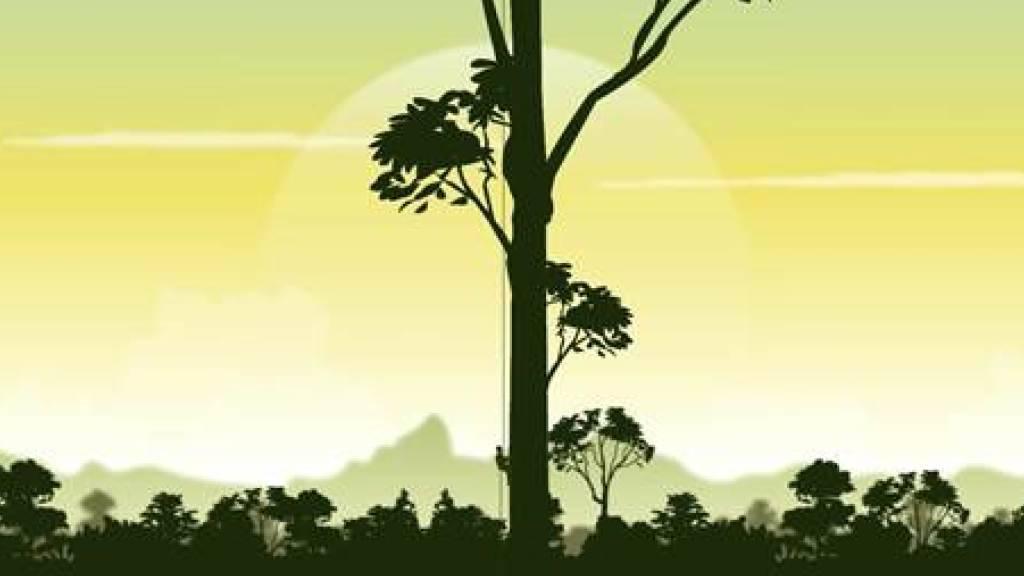 Standbild einer Animation der Entdeckung des 89,5 Meter hohen Baumes. Um ihn zu vermessen, machte sich ein professioneller Kletterer mit Massband auf den Weg in die Krone.