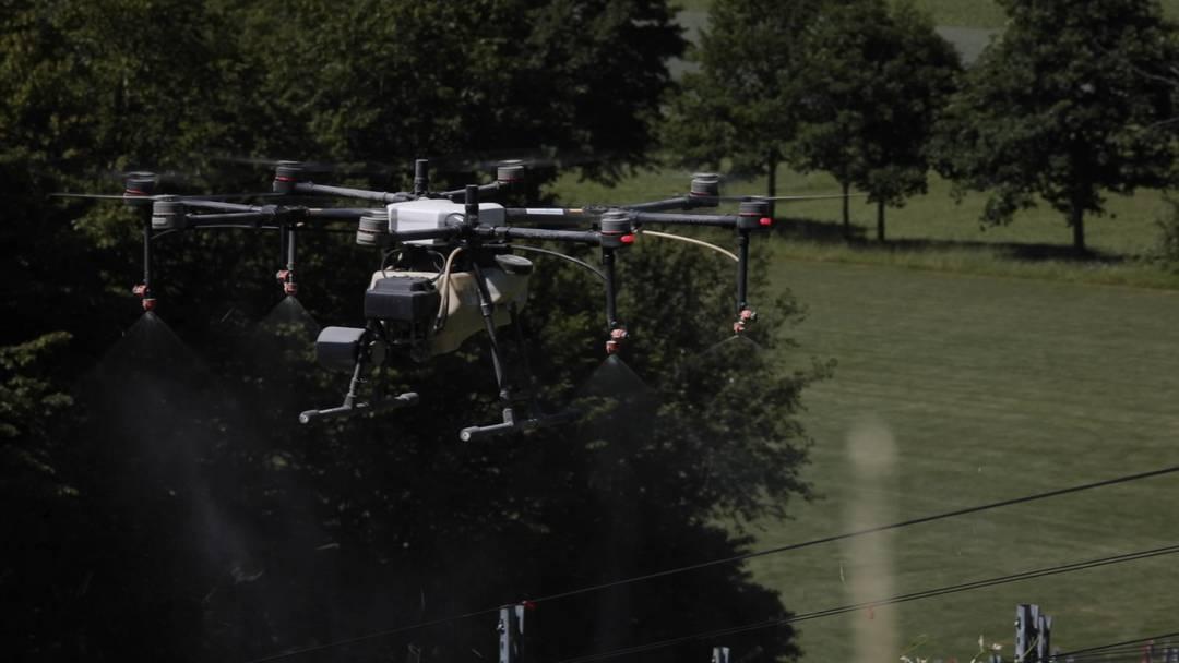 Mit riesigen Drohnen: So werden die Rebberge beim Schloss Liebegg mit Pflanzenschutz-Spritzmittel versorgt