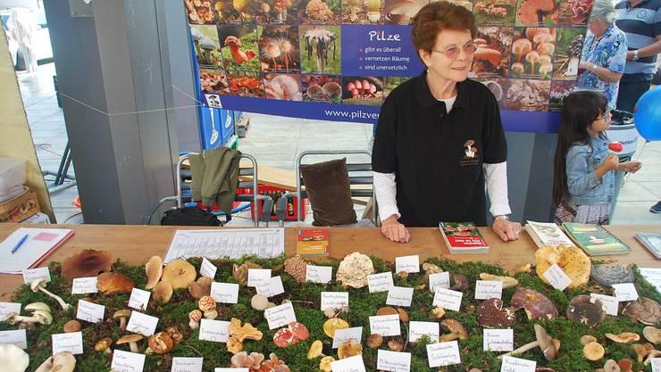 Am Dietiker Herbstmarkt hat der Verein für Pilzkunde Dietikon und Umgebung jeweils ihr Funde ausgestellt.
