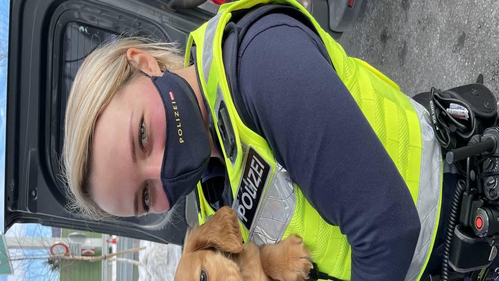 Vorarlberger Polizei befreit Hundewelpen