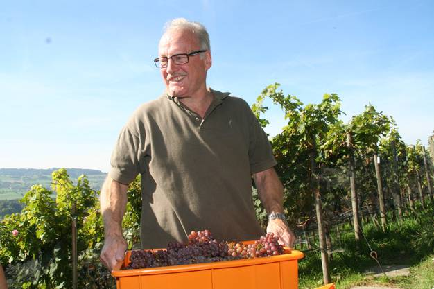 Freut sich über die gute Ernte: Hans Barmet, hauptberuflich noch Sekundarlehrer, in seinem Rebberg.