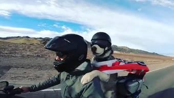 Im Internet geht das Video eines Hundes viral: Er fährt auf einem Motorrad als Begleiter mit. Anscheinend nicht das erste Mal.