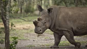 Die neue afrikanische Savannenanlage im Zoo Zürich nimmt langsam Form an