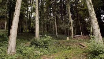 Das 15-jährige Opfer wurde in einem Waldstück bei der Ruine Balm bei Günsberg an einen Baum gefesselt. (Symbolbild)