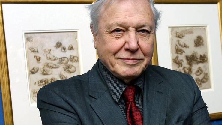 Der legendäre Naturforscher David Attenborough in einer Aufnahme von März 2008: Der Brite gibt nun auch einer australischen Schnecke seinen Namen. (Archivbild)