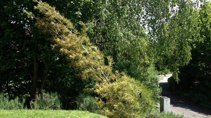 Die umgeknickten Bäume im von Vandalen heimgesuchten Garten.