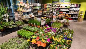 Nur wenige Stunden durften Migros und Coop Blumen ganz offiziell verkaufen. Dann änderte der Bund die Regeln.
