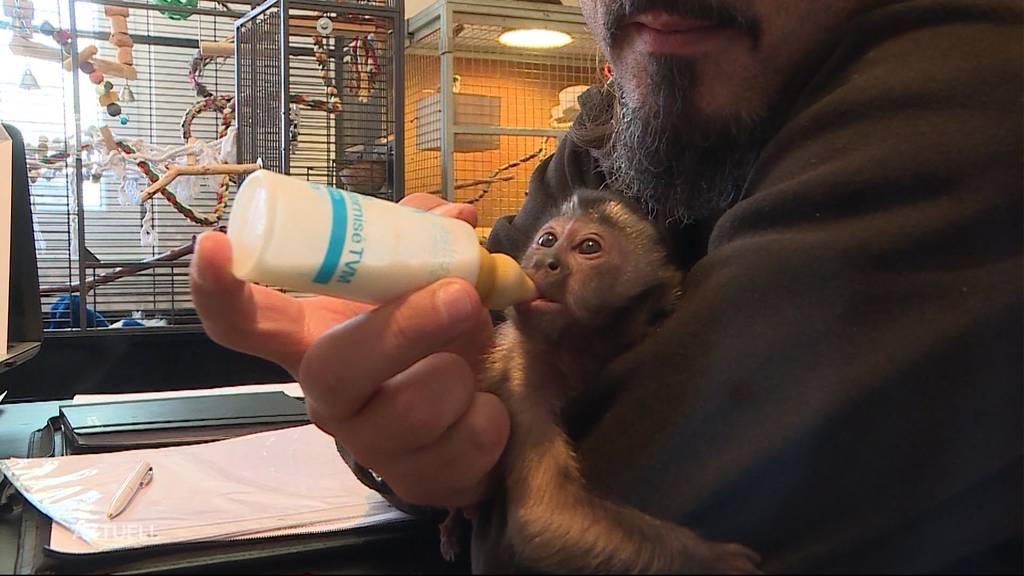 Affe Gery verzückt den Sikypark