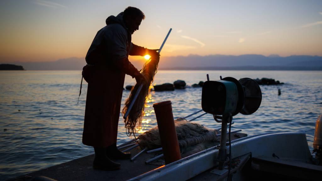 Die Fischereierträge im Genfersee sind 2020 zum ersten Mal nach sechs Jahren wieder leicht gestiegen. (Archivbild)