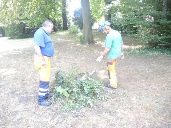 Mitarbeiter des Werkhofs untersuchen die abgebrochene Stelle am Baumstumpf