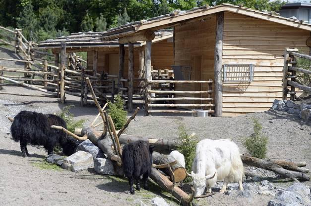 Am Wochenende wird die mongolische Steppe mit Spezialevents feierlich eröffnet.