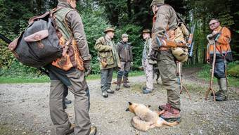 Neben Räude ist in den letzten Jahren auch die Staupe wieder im Kanton aufgetaucht. Die Viruserkrankung befällt Füchse und Dachse und kann bei einem milden Verlauf überlebt werden.