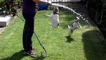 Sommerliche Haustiervideos: Youtube ist voll davon