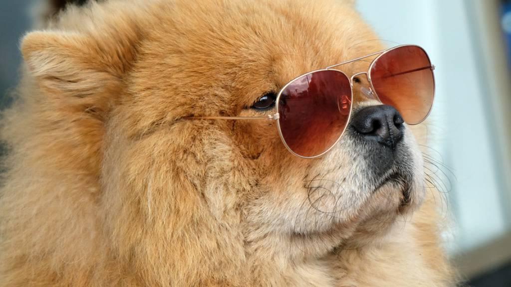 Neue Formel: So alt ist dein Hund wirklich