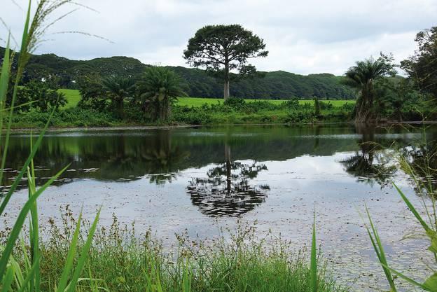 Die Landschaft rund um die Plantage ist ein wahres Idyll.