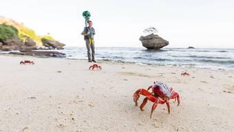 Eine Weihnachtsinsel-Krabbe am Strand, dahinter ein Mann mit der Google Street View-Kamera.